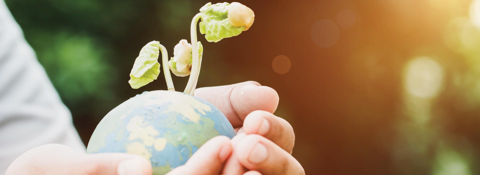 ziua-internationala-a-mediului-dezvoltare-durabila-dezvoltare-sustenabila-sustenabilitate-natura-reciclare-blog-royal-synergy
